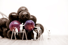 Miniature Painters Coloring Red Grapes. Macro Photo