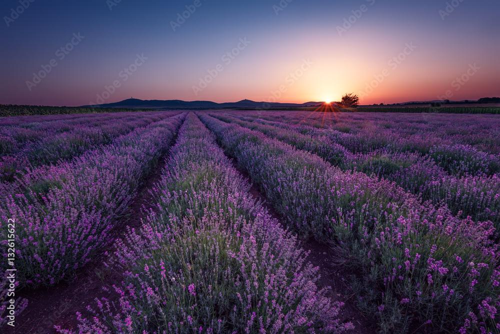 Lavender fields. Beautiful image of lavender field. Summer sunrise landscape, contrasting colors. Beautiful, dramatic sky.