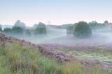 spokojny mglisty poranek na wzgórzach wrzosowych - 132625821