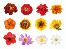 Set Of Brightly Colored Flowers Isolated On White Background