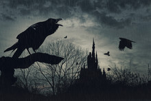 Horror Scene With A Raven In F...