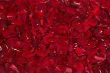 A Background Made Of Rose Petals