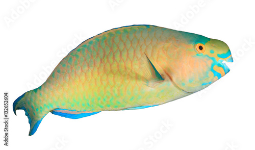 Poster Sous-marin Fish isolated. Parrotfish on white background. Bullethead Parrotfish cut out