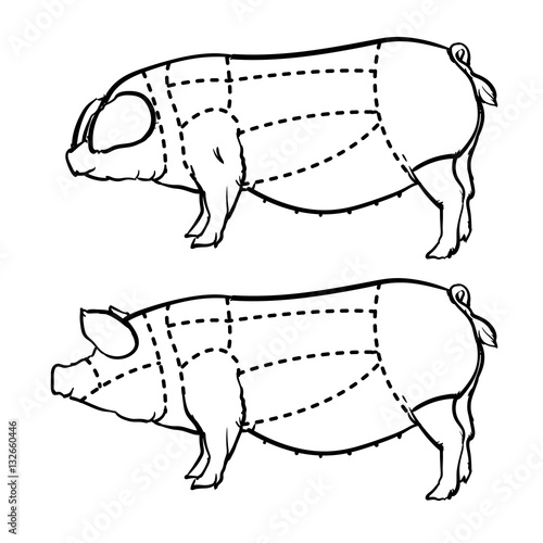 Hand Drawn Outline Pig Diagram Butcher Diagram Drawing Vector