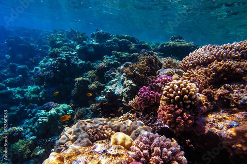 Papiers peints Recifs coralliens red sea underwater coral reef
