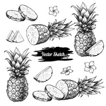 Vector Pineapples Hand Drawn S...