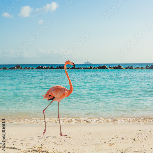 One flamingo on the beach