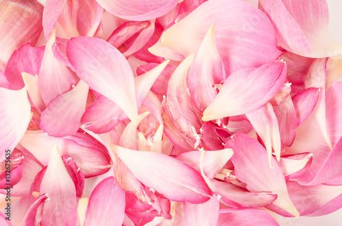 Foto auf Gartenposter Lotosblume pink petal lotus flower.