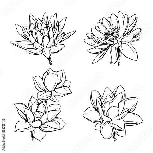 Lotus Flowers Sketch Vector Illustration Lotus Clip Art Buy This