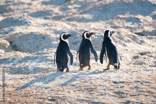 Three penguins looking back over their right shoulder Canvas-taulu