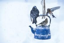 Kar Yağarken Eğlenceli Kuşlar