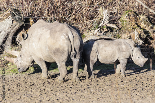 Canvas Prints Rhino breedlipneushoorn