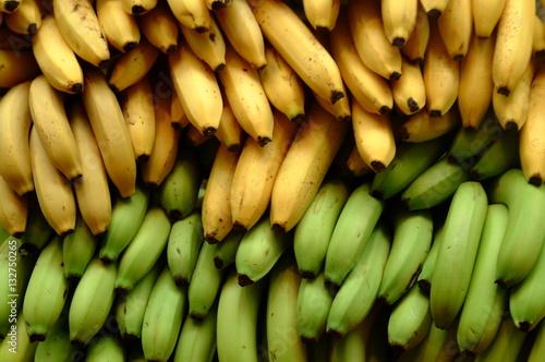 Fotografie, Obraz  Bananas