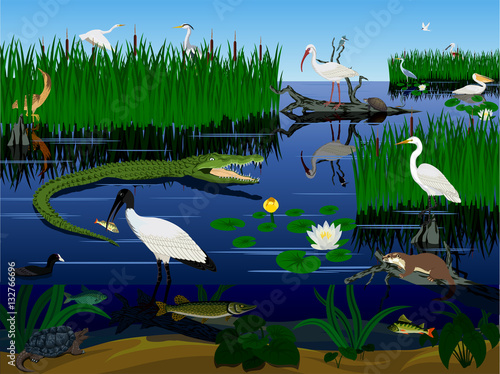 Fotomural vector wetland Pantanal Florida Everglades landscape with animals