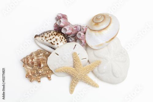 Fotografie, Obraz  A group of seashells