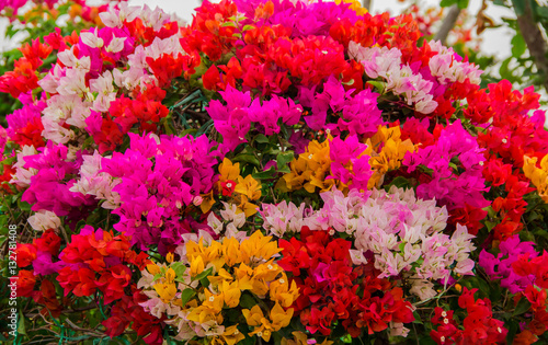 In de dag Roze beautiful colorful flower