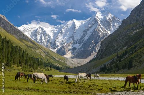 Obraz na płótnie Wild horses on a sunny meadow in the mountains
