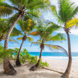 Beautiful white sand beach wiht palm trees on Seychelles.
