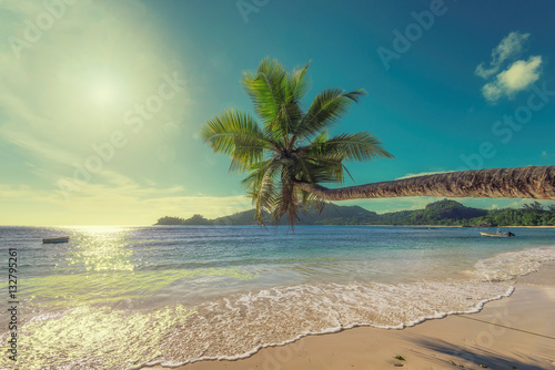 Foto op Canvas Eiland Coconut palm tree on tropical beach, Seychelles islands.
