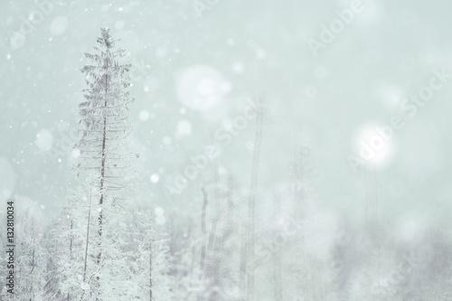 Fototapety, obrazy: Winter forest blurred background snow landscape