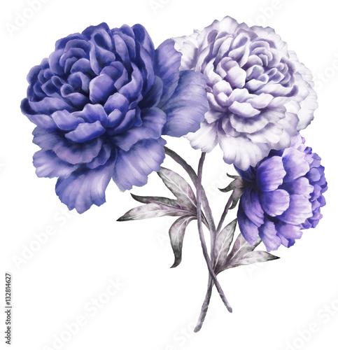 niebieskie-peonie-kwiaty-w-akwarela-kwiatowy-ilustracji-w-pastelowych-kolorach