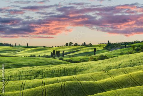 Poster Lime groen Waved green fields in sunny Tuscany.