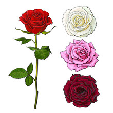 Pink, White, Deep Red Open Rose Bud And Flower With Green Leaves, Sketch Style Vector Illustration Isolated On White Background. Realistic Hand Drawing Of Red Rose, Symbol Of Love, Decoration Element