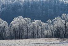 Frozen Trees, Natchez Trace Parkway TN