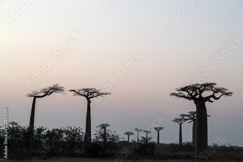 Keuken foto achterwand Baobab The Avenue of the Baobabs, Madagascar.