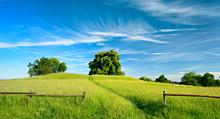 Summer Landscape Of Footpath Through Green Pasture Under Beautiful Blue Sky