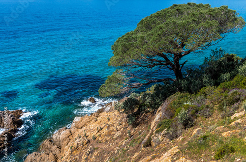 Tuinposter Centraal-Amerika Landen Pine Tree