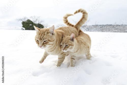 Fototapeta il gran cuore dei gatti