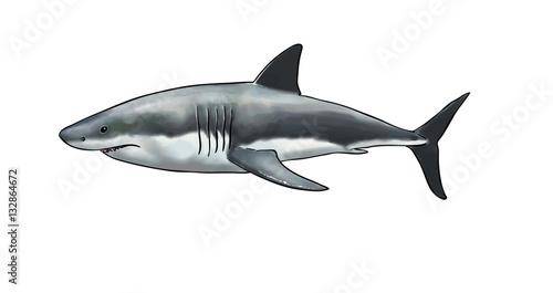 Valokuva  Digital watercolor of a white shark