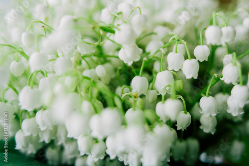 In de dag Lelietje van dalen Blossoming lily of the valley in the forest. Lily-of-the-valley. Convallaria majalis.Spring background. Floral background.Selective focus.