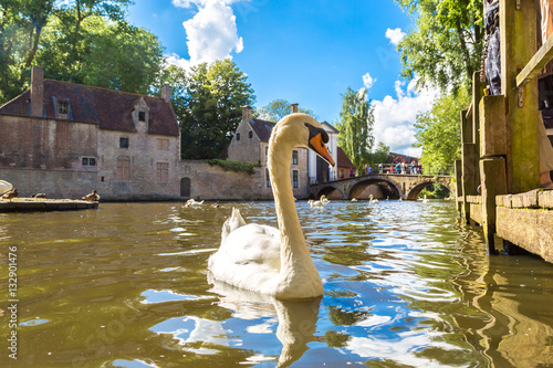 Poster Cygne Swan in a canal in Bruges