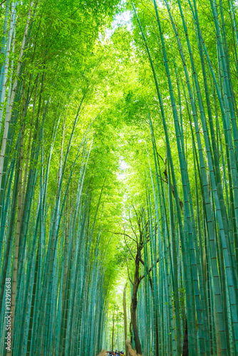 Poster Bamboe Path to bamboo forest at Arashiyama in Kyoto.