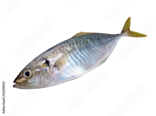 Fotografija  Pompano scad fish,Jack fish isolated on white background