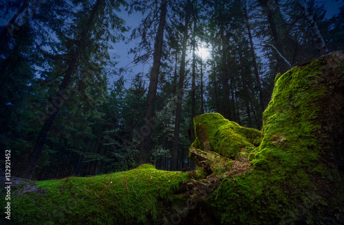 Fairytale night forest by the moonlight. Fallen tree trunk, covered by green moss, on foreground.