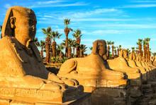 Sphinx Allee In Luxor