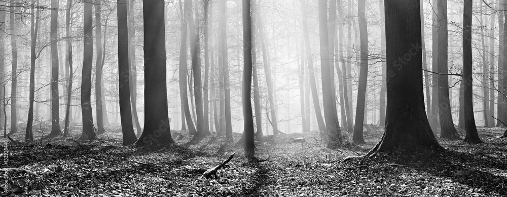 Fototapeta Kahler Buchenwald im Winter, Sonnenstrahlen dringen durch Nebel, Panorama, Schwarz-Weiß