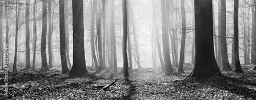 las-bukowy-zima