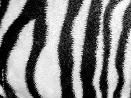 Canvas Prints Zebra Zebra skin pattern leatherette fabric