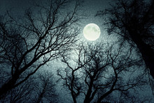 Dark Enchanted Photo Of A Full Moon In The Trees Branches Background. Blue Fairy-tale Colors