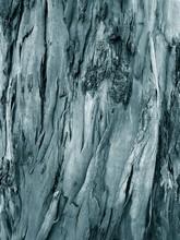 Close-up Of Shedding Bark Of E...