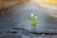 White Flower Growing On Crack ...