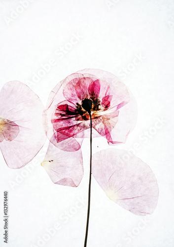 suche-kwiaty-maku