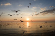 nature background in sunset time with Seagulls flying
