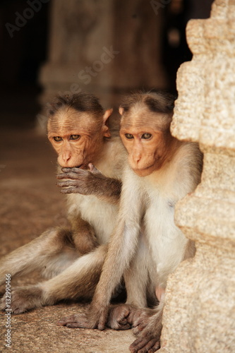 Photo  Naughty monkeys
