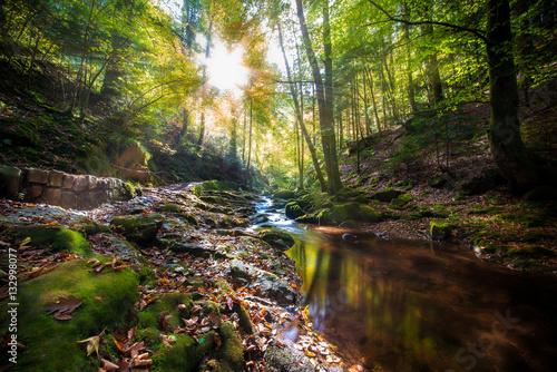 Photographie Paradies Schwarzwald