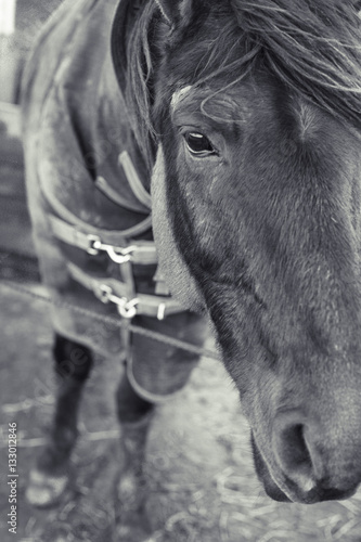 headshot of the horse in winter coat
